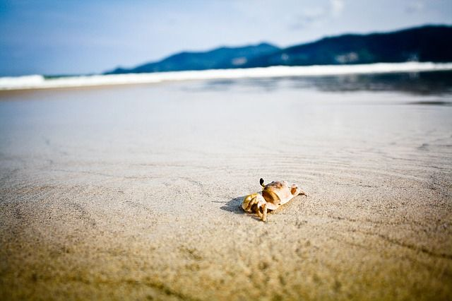 crab-in-the-sand