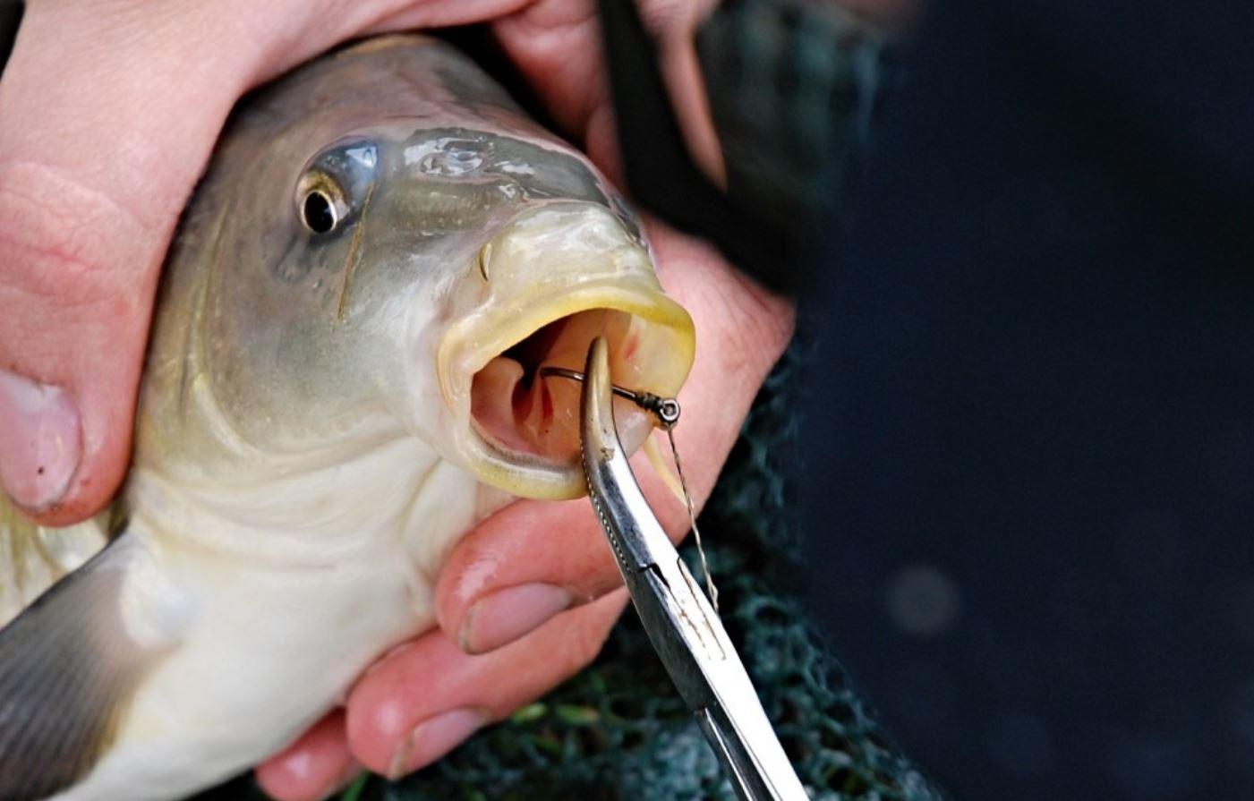 Les 7 meilleures pinces à pêche que vous n'aurez jamais portées