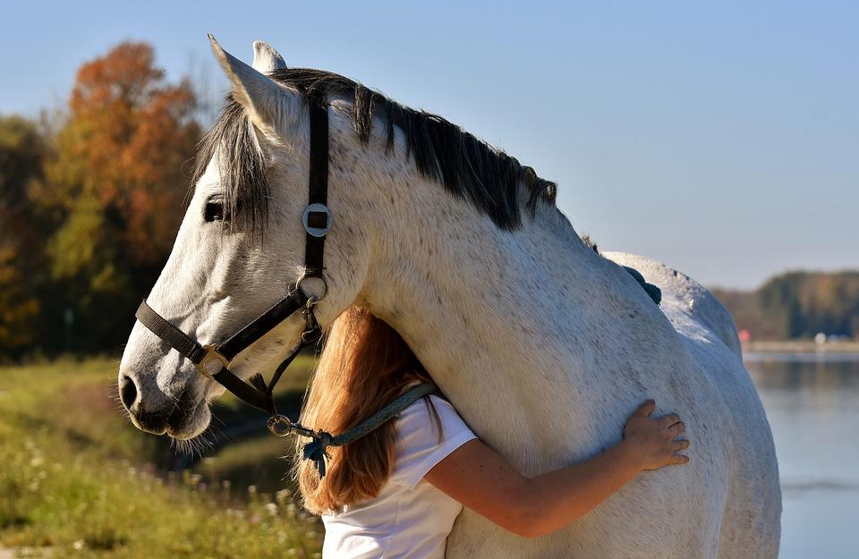 10 idées de cadeaux pour les amoureux des chevaux pour ce Noël